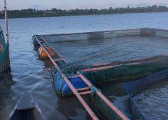 Rapport de visite de inter-profession poisson